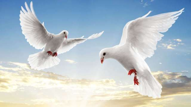 animal-flying-white-doves-backgrounds-powerpoint